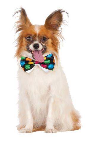 Clown Polka Dot Bowtie Bow Tie Fancy Dress Costume Outfit Dog Pet Animal S To XL
