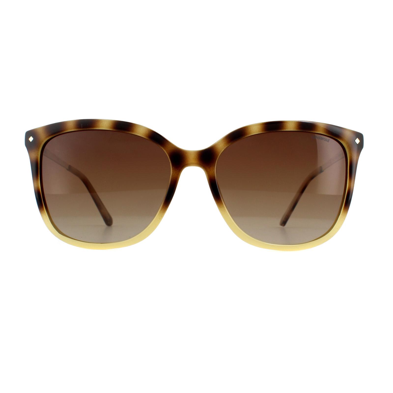0c272cc302 Sentinel Polaroid Sunglasses PLD 4043 S Y67 X3 Havana Gold Brown Polarized