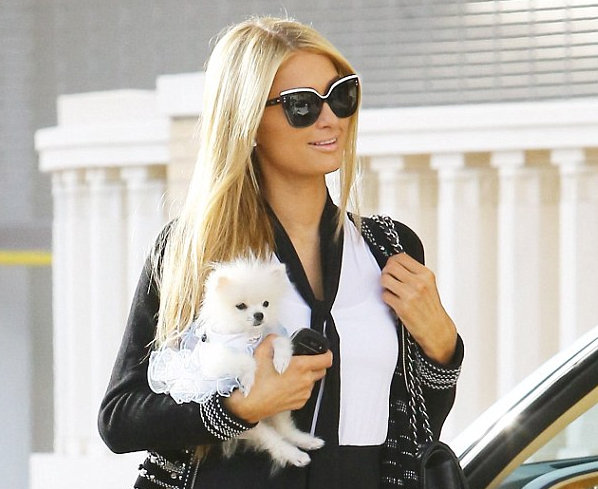 Paris shops til she drops with new pooch