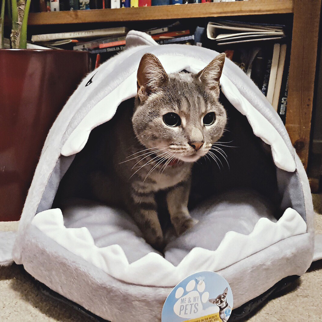 Self-Conscious Corrugated Paper Cat Ears Shaped Board Scratcher Cardboard Cat Sleep Favorite House Safety Pet Supplies Home & Garden
