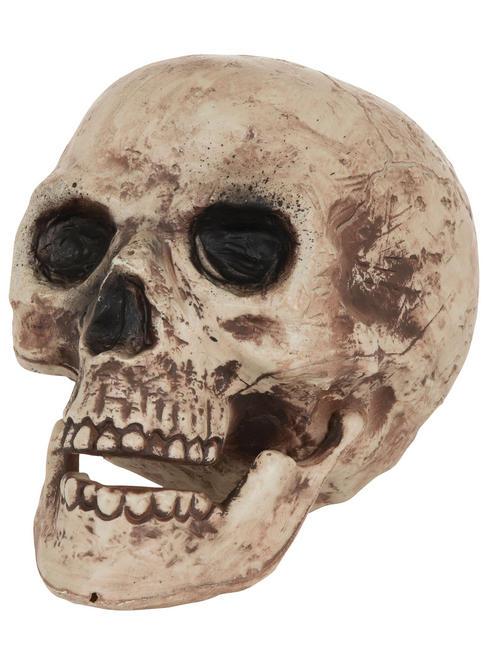 Large Skull Head Prop