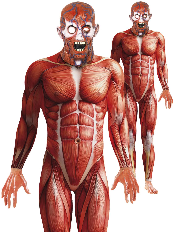 Adults Anatomy Man Costume Mens Muscle Halloween Fancy Dress Second