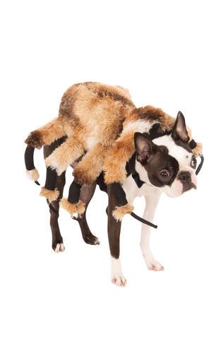 RAGNO-gigante-Dog-Costume-Inquietante-TARANTOLA-Peluche-Deluxe-Pet-costume-di-Halloween