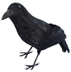 Feathered Black Crow