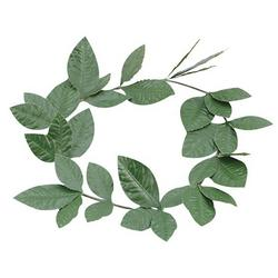 Green Leaf Laurel Adults Wreath Mens Ladies Roman Greek Unisex Toga Fancy Dress