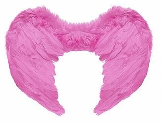 Pink Feather Wings