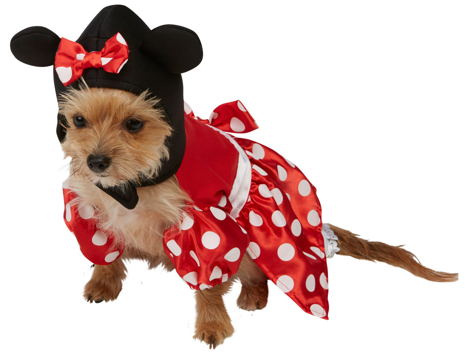 Minnie Mouse Dog Costume Video