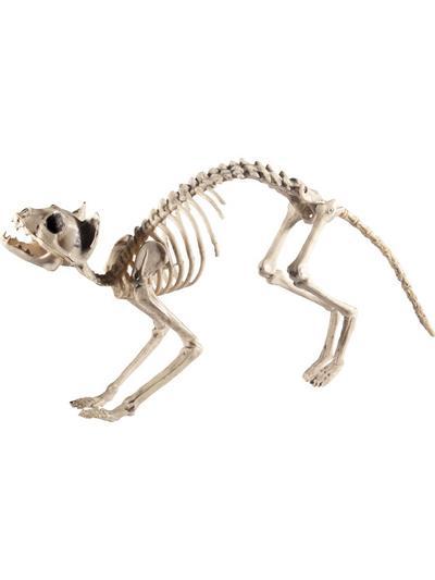 Cat Skeleton Prop