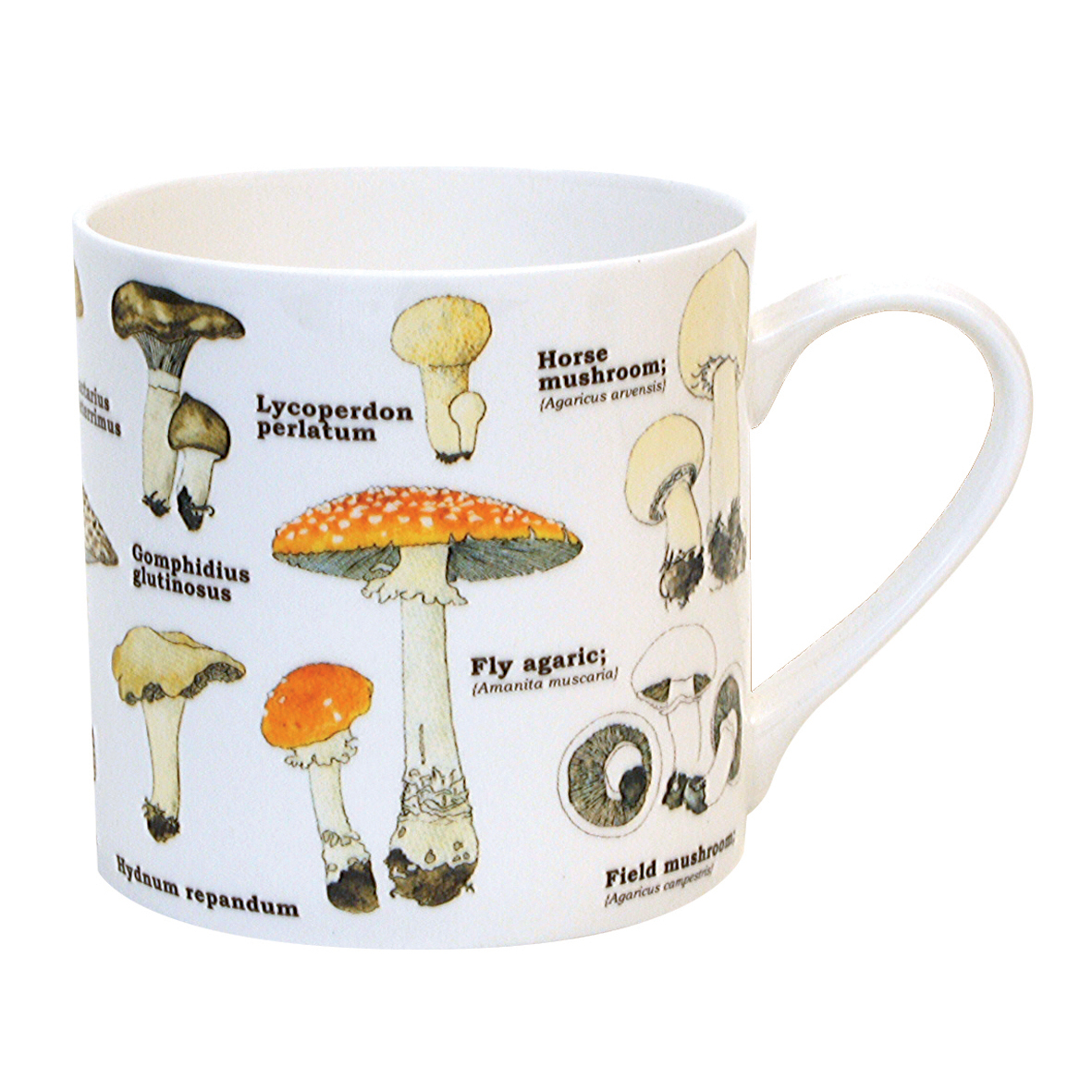 Ecologies Mushrooms Fine Bone China Mug