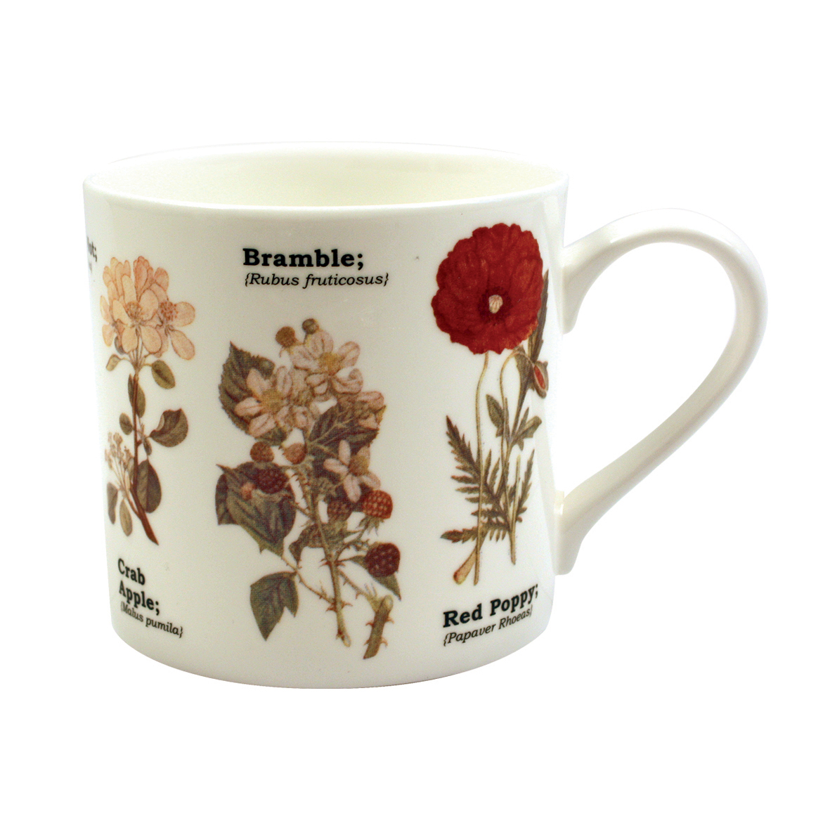 Ecologies Wild Flowers Fine Bone China Mug