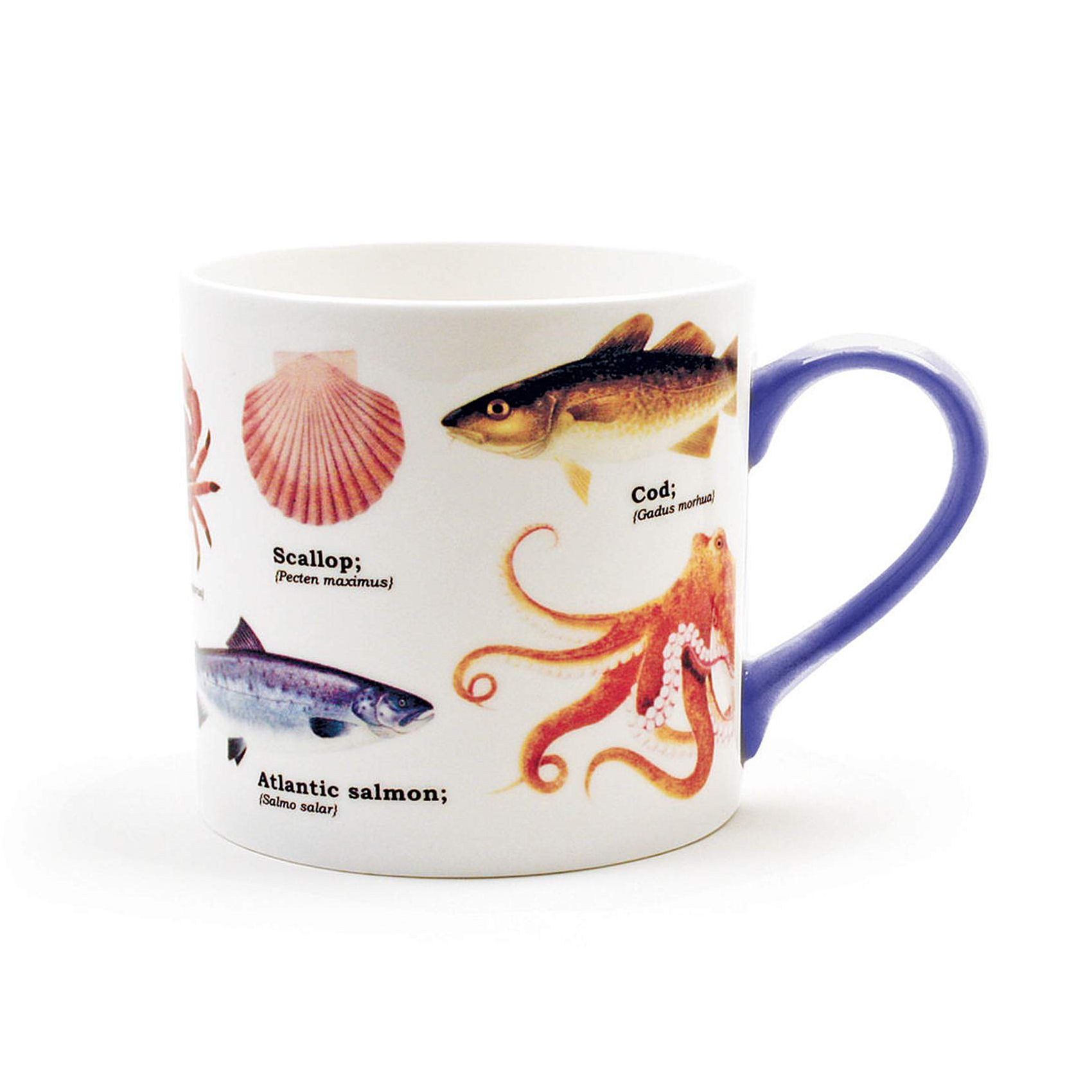 Sea Life Species Fine Bone China Mug