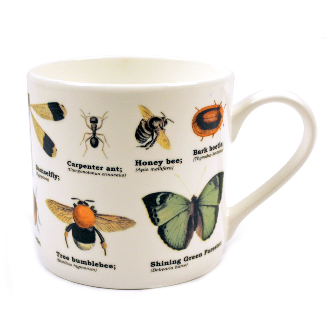 Insects Fine Bone China Mug