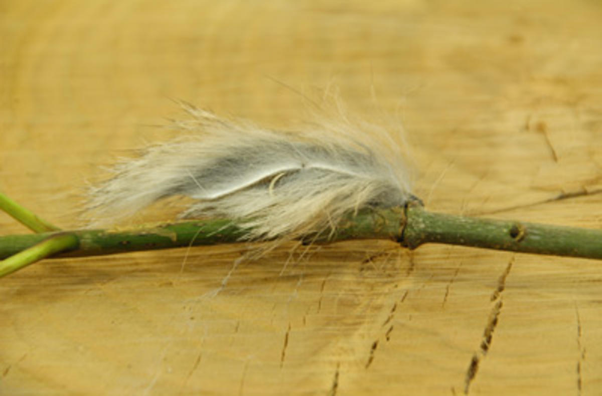TALON TEN FLUFF CATS WHISKER GREY SIZE 8 TROUT FLIES