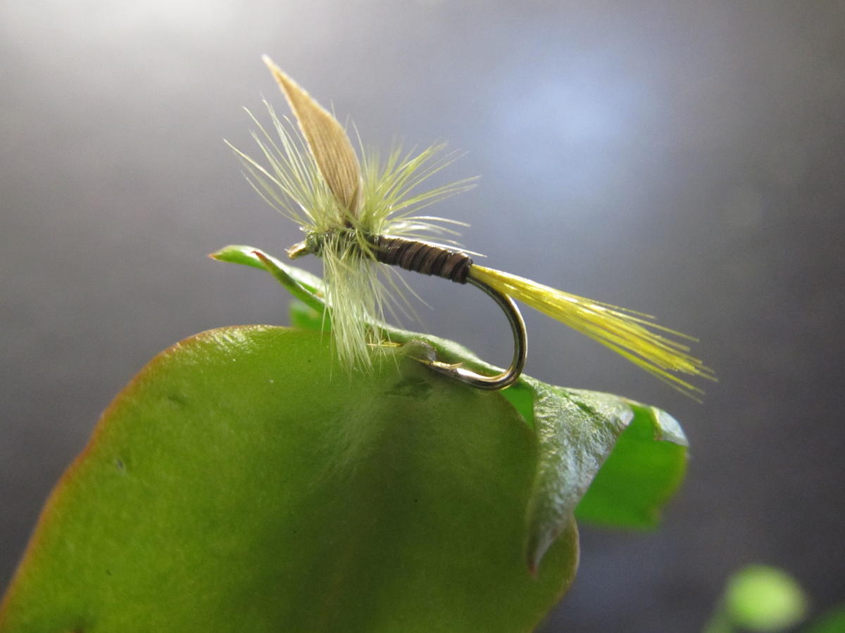 TALON TEN OLIVE QUILL DRY SIZE 14 TROUT FLIES