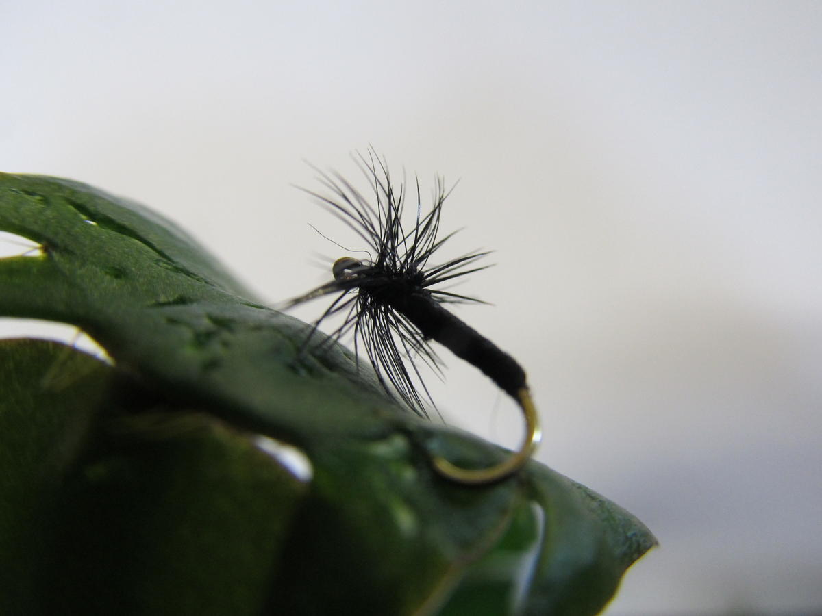 TALON TEN BLACK SPIDER DRY SIZE 16 TROUT FLIES