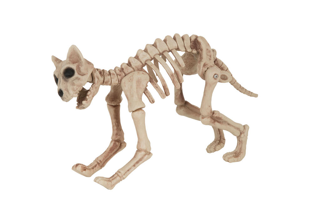 Halloween Skeleton Cat Prop Trick Or Treat Fancy Dress Party
