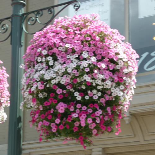 10 Quot 14 Quot Green Easy Fill Hanging Baskets Garden Plant Pot