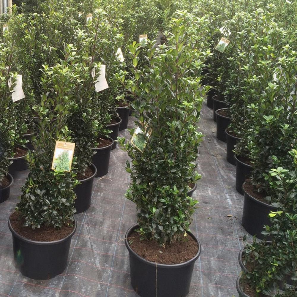 20L HEAVY DUTY PLASTIC PLANT POTS GARDEN GROWING SOIL TREE