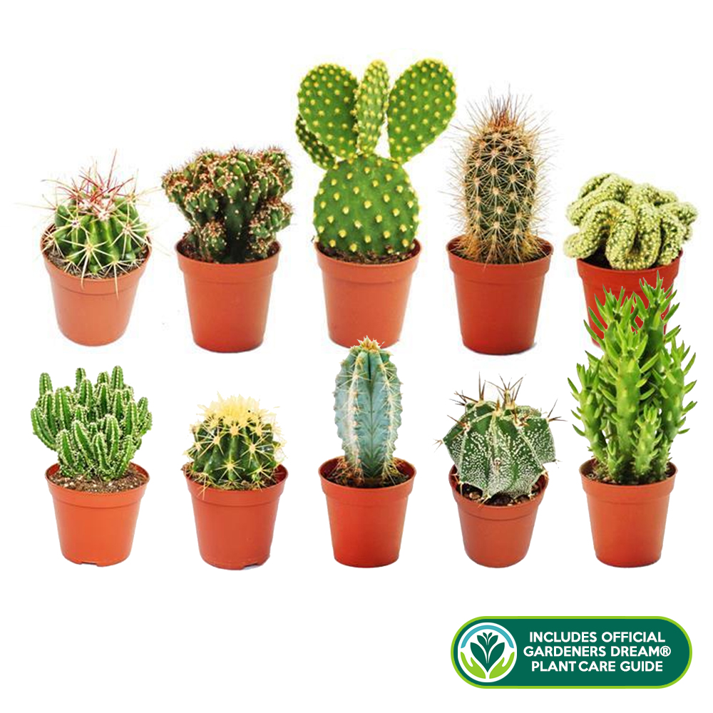 10 x different mixed cactus collection house gardeners dream plant