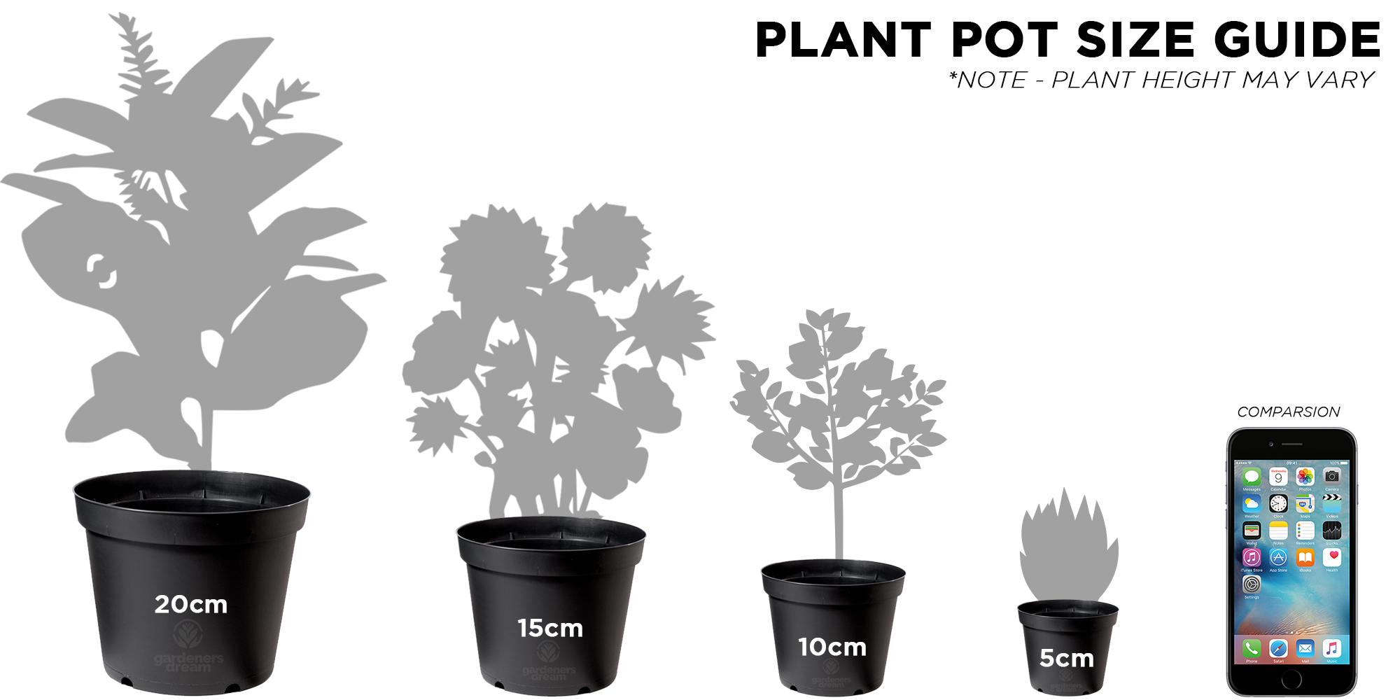 Indoor Plant Mix 3 Plants House Office Live Potted Pot Plant