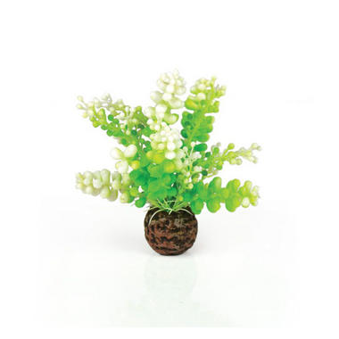 Oase BiOrb Green Caulerpa Aquarium Decoration