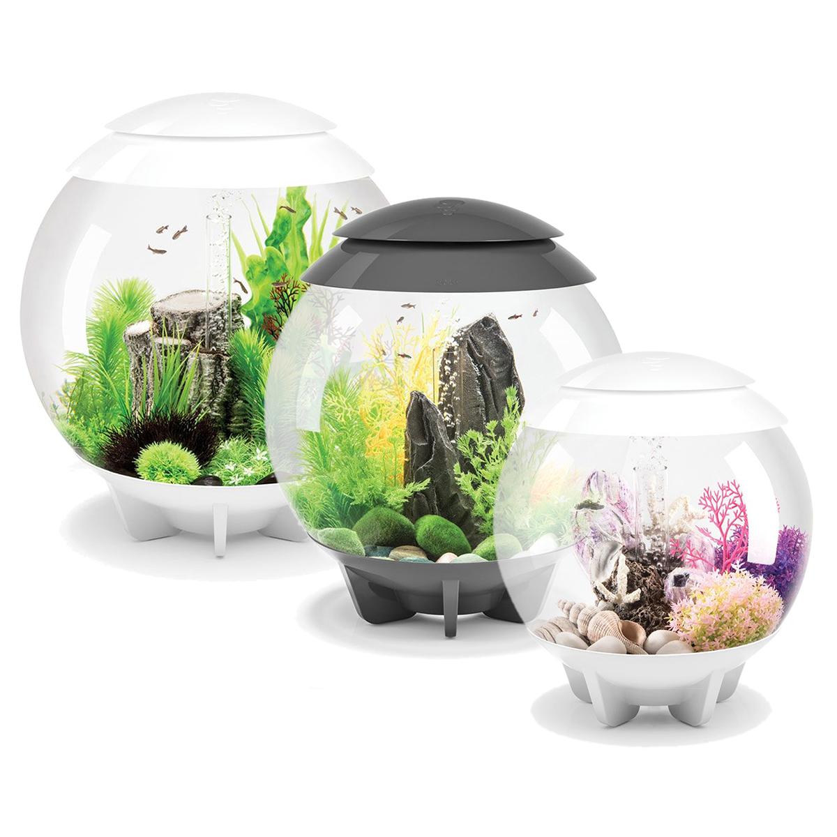 biorb halo aquarium 15l 30l 60l fish tank all in one setup. Black Bedroom Furniture Sets. Home Design Ideas