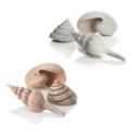 Oase BiOrb Ornament Assorted Sea Shells