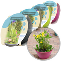 Moerings Patio Pond Plant Set