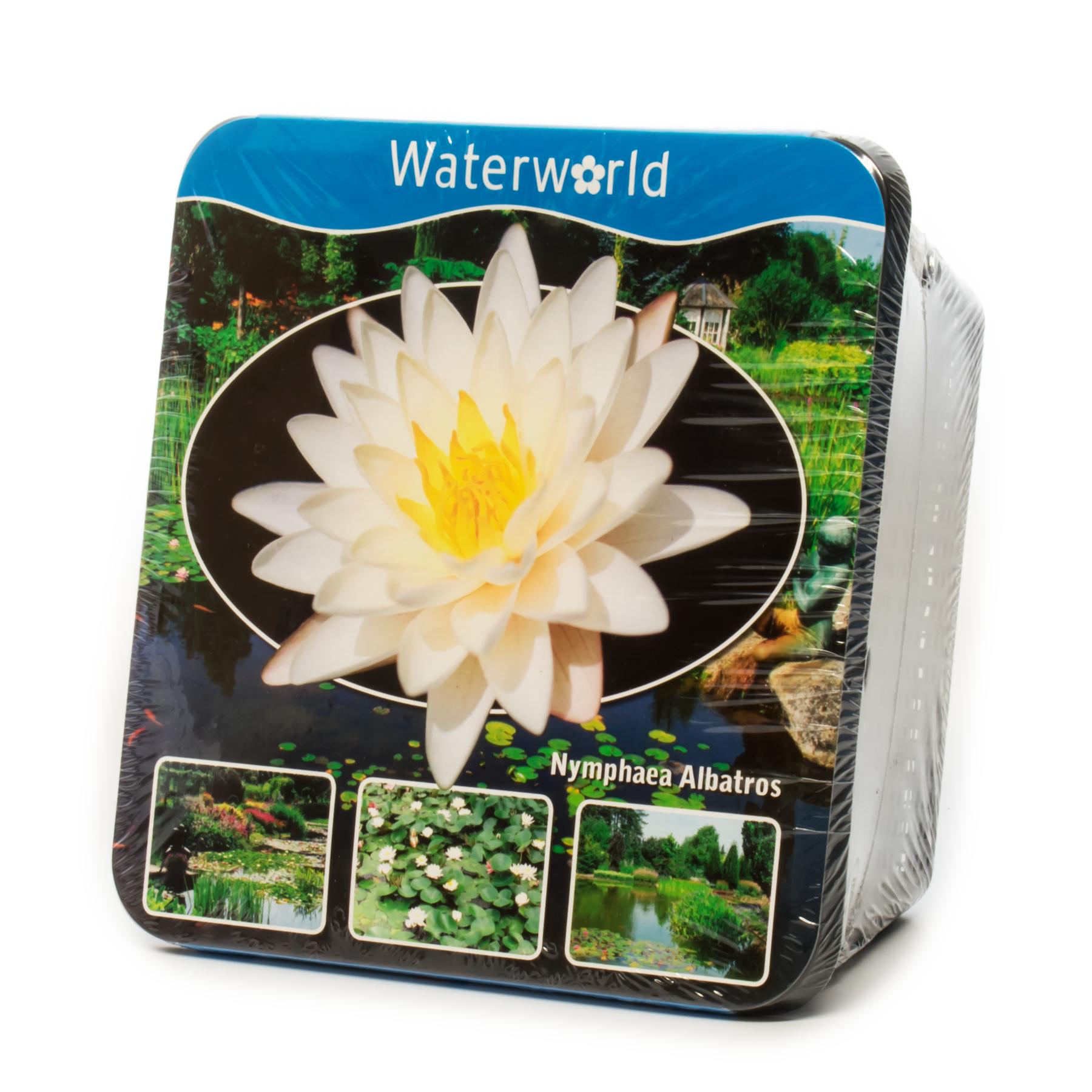 Pond Plants Prepacked Water Planting Kit Basket Live Real Marsh Bog