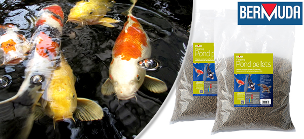 Types of Food for Your Pond Fish