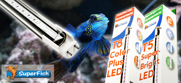 Save Energy with LED Aquarium Lights