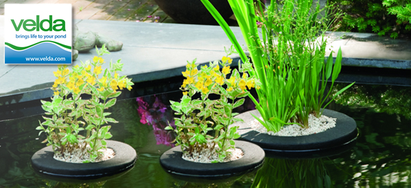 Bring Your Pond to Life with Pond Plants