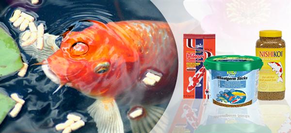 Kickstart Your Winter with Wheatgerm Fish Food