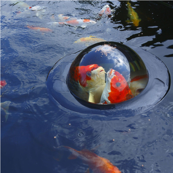 Velda floating fish domes for Carpe koi aquarium 300 litres