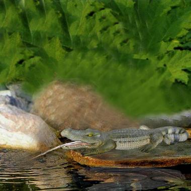 Bermuda Crocodile Water Spitter