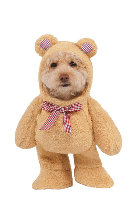 Walking Teddy Bear Dog Costume Thumbnail 1