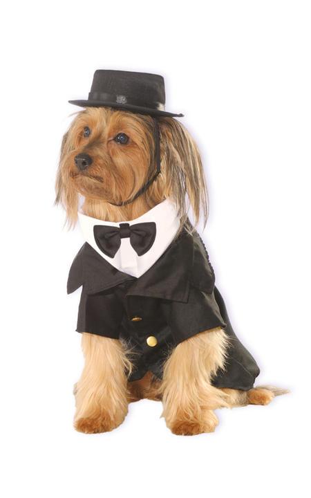 Dapper Dog Costume Thumbnail 1