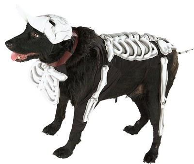 Corpse Bride Dog Costume
