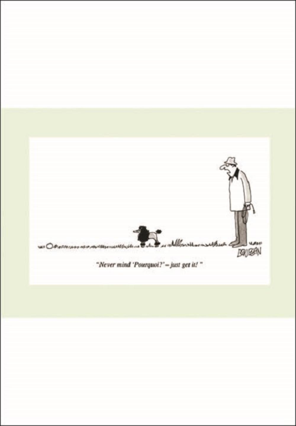 Punch Dog Pourquoi Cartoon Humour Greeting Card