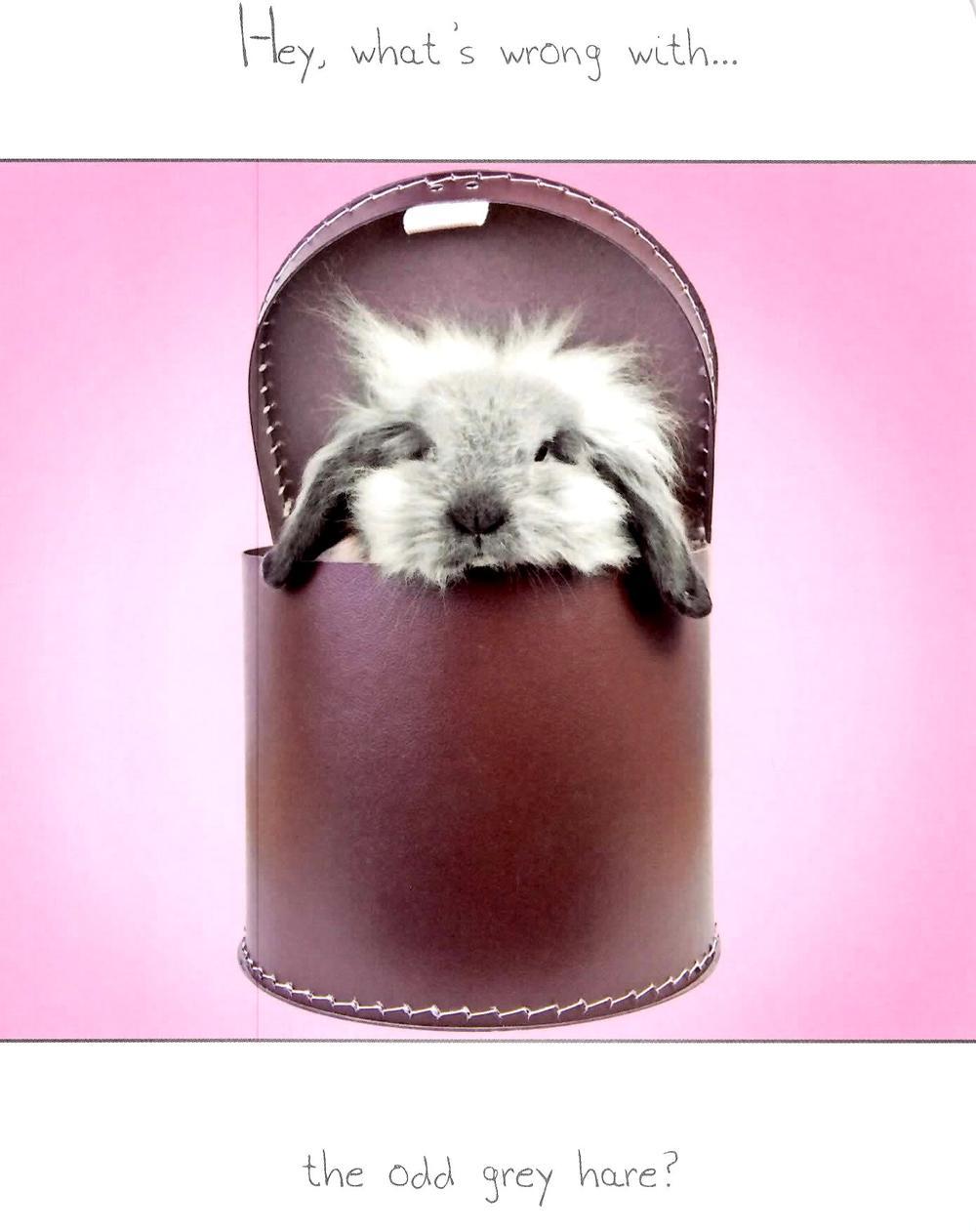The Odd Grey Hare Funny Joke Happy Birthday Card