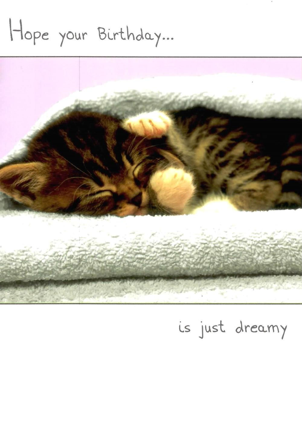 Hope Your Birthday Is Just Dreamy Cute Kitten Happy Birthday Card