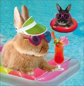 Bunny Bathers Square Greeting Card