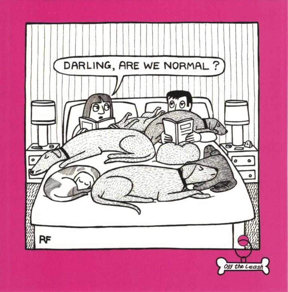 Dogs On Bed Square Cartoon Humour Greeting Card