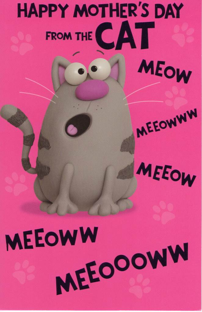 is a cat a mammal