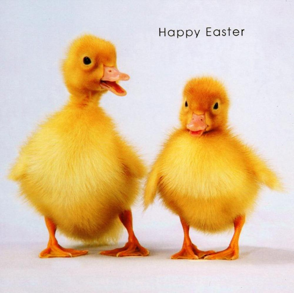 Happy Easter Cute Ducklings Photo Greeting Card