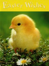 Easter Wishes Cute Chick Small Greeting Card