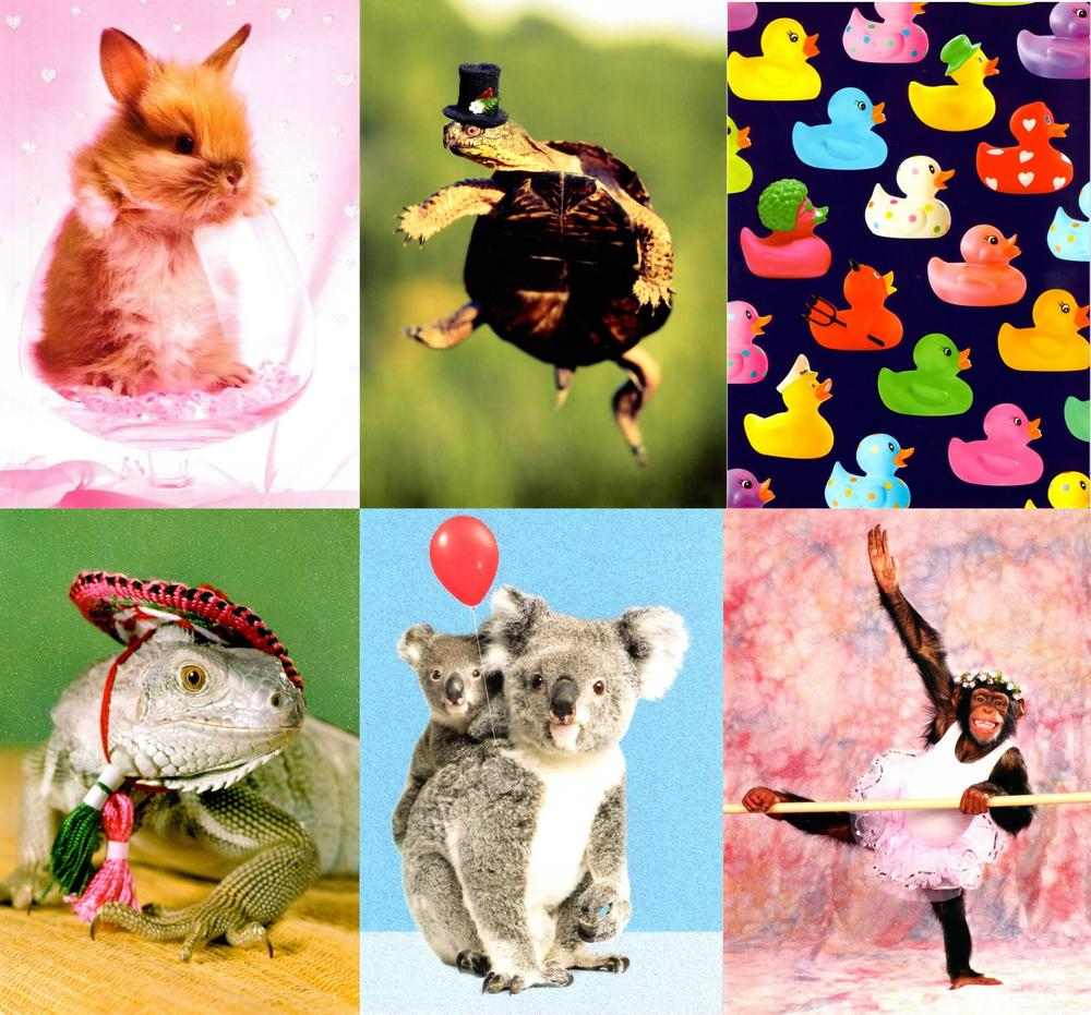 Assorted Pack of 6 Photo Birthday Greeting Cards