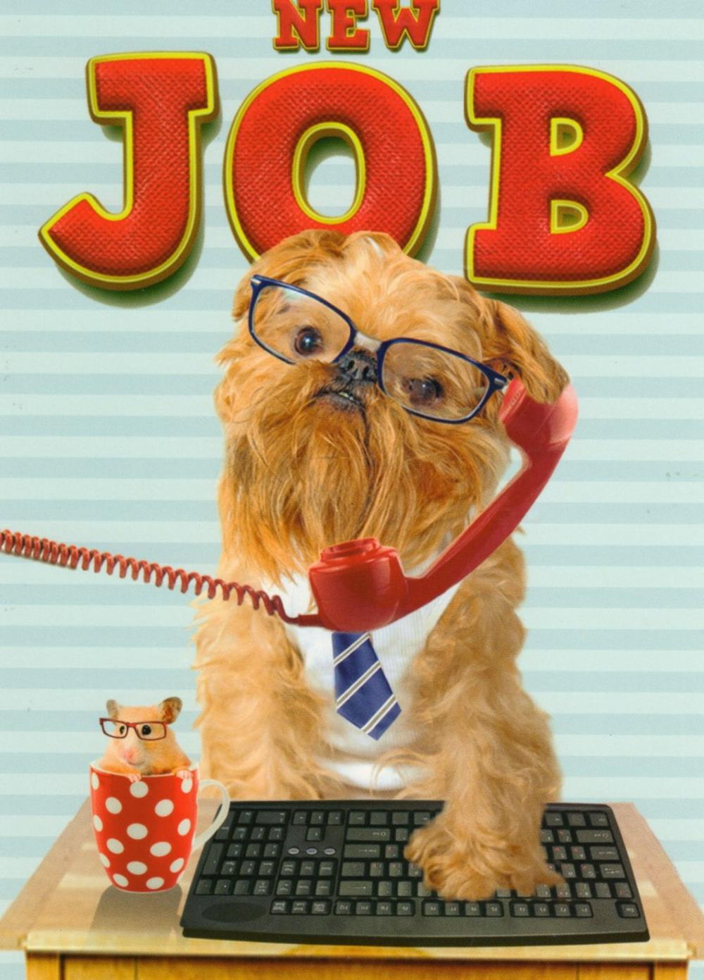 New Job Good Luck Greeting Card