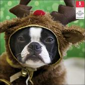 Pack of 5 Festive Dog Prince's Trust Charity Christmas Cards