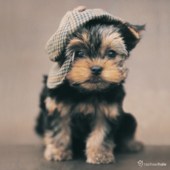 Puppy With Hat Cute Greeting Card
